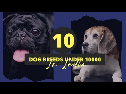 Dog price list in india ( Dog breeds under 10000 rs. )