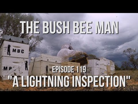 "Half-Yearly Hive Inspections - Episode 119: ""A Lightning Inspection"""