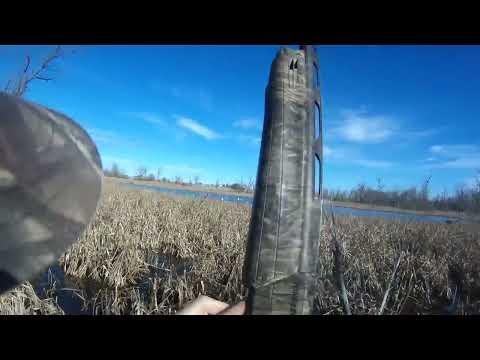 Iowa Snow Goose Jump Shoot. 20 Birds One Gun