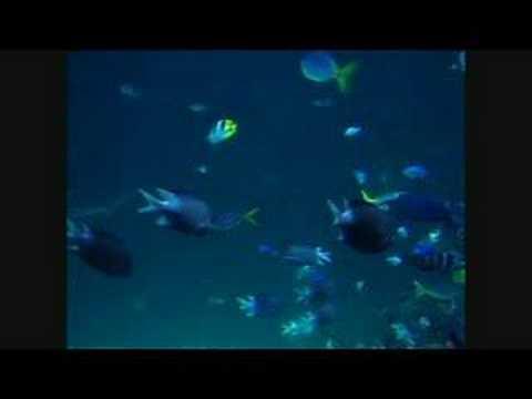 sydney aquarium youtube. Black Bedroom Furniture Sets. Home Design Ideas