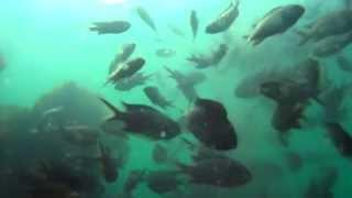 淡路島津名港 水中映像 波止テトラ付近