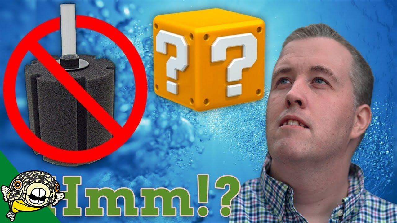 you-don-t-need-an-aquarium-filter-you-need