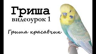 """🎤 Учим попугая по имени Гриша говорить, видеоурок 1: """"Гриша красавчик!"""""""