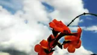 Hello everyone I'm Mugi! This song Nouzenkatsura from Yuko Ando. ho...