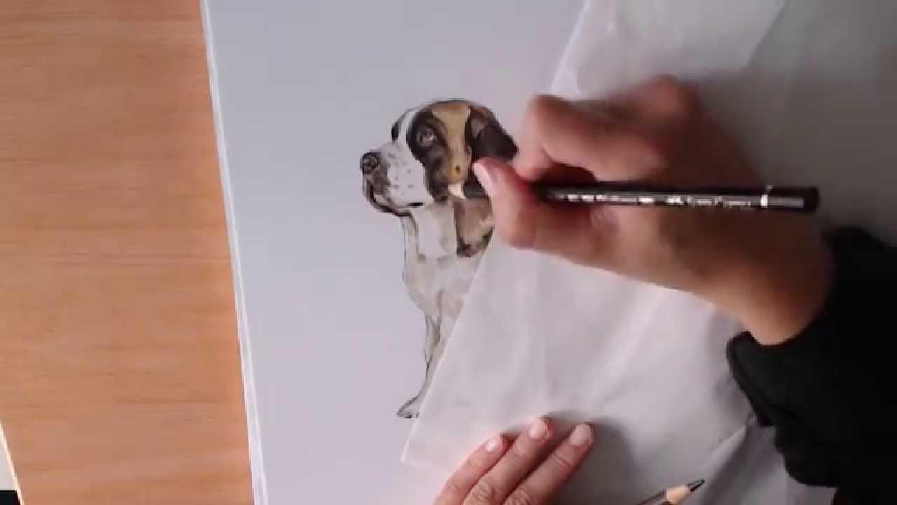 how i draw st bernard youtube