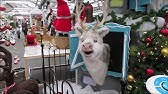 Christmas Display At Tong Garden Centre Youtube