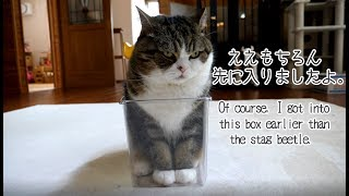 もちろん、先に入っていたねこ。-Of course, Maru got into the box earlier.-
