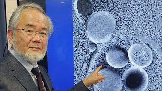 Нобелевскую премию по медицине получит японский учёный (новости)