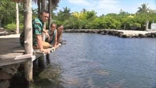 Ronnie in Samoa- Turtles