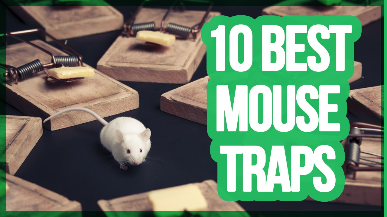 10 Best Mouse Traps 2018 Best Way To Get Rid Of Mice Youtube