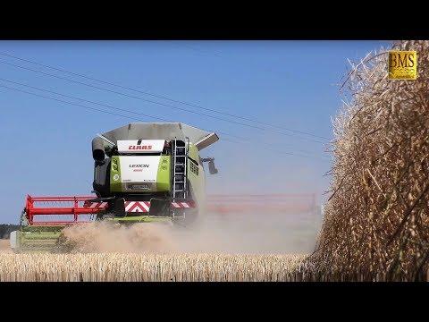 Rapsernte 2018 - Mähdrescher Claas Lexion 770 TT -Salzwedel- hawk hunt - biggest combine harvester