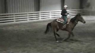 Reining Horse For Sale In Nj, Sired By West Coast Whiz