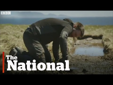 Possible New Viking Site in Newfoundland
