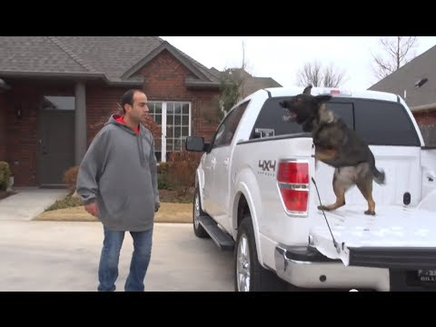 Family Uses Their German Shepherd Protection Dog, Aspen, in Training
