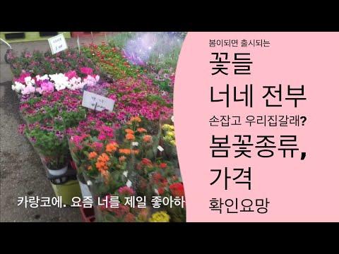 화초키우기 봄꽃시장 구경   꽃잘피는 화초