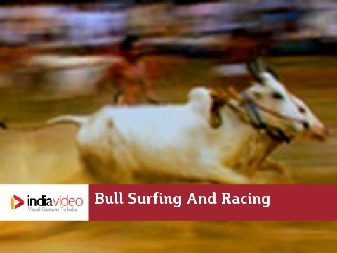 Anandappalli Maramadi - Bull Surfing or Bull Race