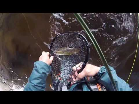 #31 The Big Manistee, MI - Fishing The Top 100 Trout Streams In America
