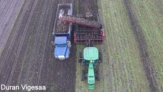 Sugar Beet Harvest North Dakota