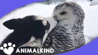 Puppy and owl get too close for comfort