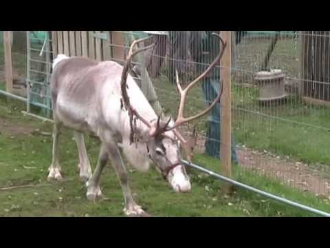 Barbara & Alan Visit Tarvin Sands Reindeer Centre & Fishery In Cheshire