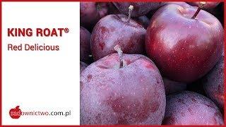 King Roat - Red Delicious [odmiany jabłoni / apple variety]
