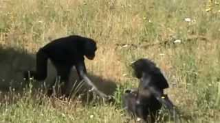 Funny Animal Mating With Other Animals Compilation 2015