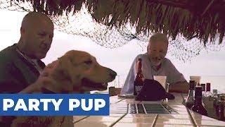 Dog High Fives Bartender For Snack