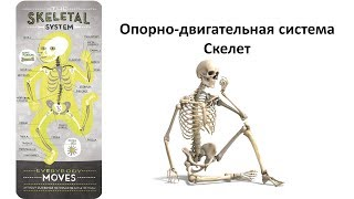 5.2 Опорно двигательная - скелет (8 класс) - биология, подготовка к ЕГЭ и ОГЭ 2019