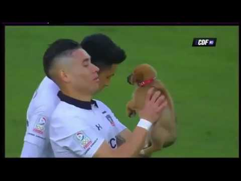 Los jugadores de Colo Colo salieron a la cancha con perros que buscan ser adoptados