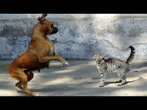 Funny Dogs Who Are Scared Of Cats  Try Not To Laugh!