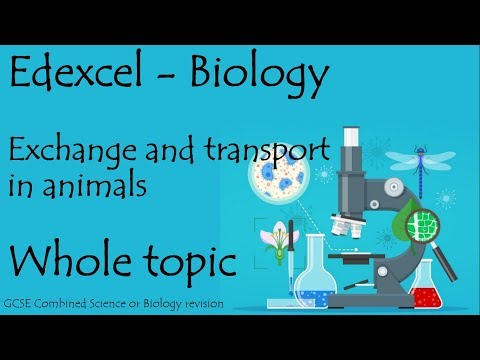 The whole of Edexcel EXCHANGE AND TRANSPORT. GCSE biology or combined science revision for paper 2