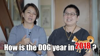 How is the dog year in 2018?