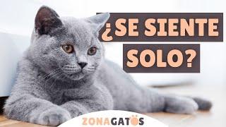 ¿Mi gato SE SIENTE SOLO sin otro gato? 5 SEÑALES para descubrirlo