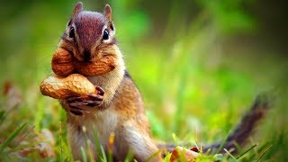 Little Animals 🐿️😍 Little Cute Animals Playing (Full) [Funny Pets]