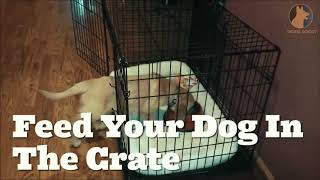 How To Properly Crate Train Your Dog -