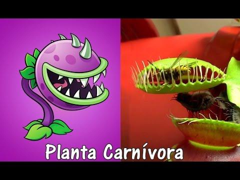 Plants Vs Zombies 2 Plantas en la Vida Real con Imágenes SEGUNDA PARTE