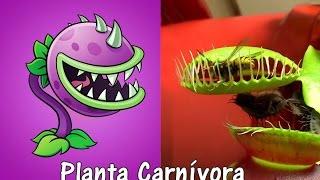 plants vs zombies 2 plantas en la vida real con imgenes segunda parte