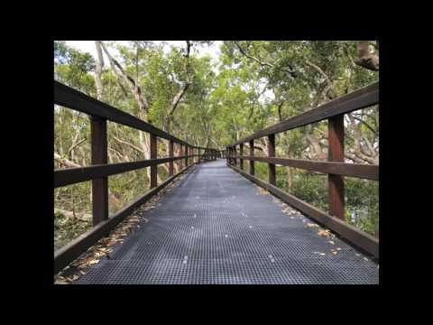 Wynnum Mangrove Boardwalk Brisbane, Australia