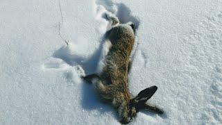 KARDA TAVŞAN AVI 2018. SANİYE SANİYE GÖRÜNTÜLER. HARE HUNTİNG.охота на кроликов.اصطياد الأرانب