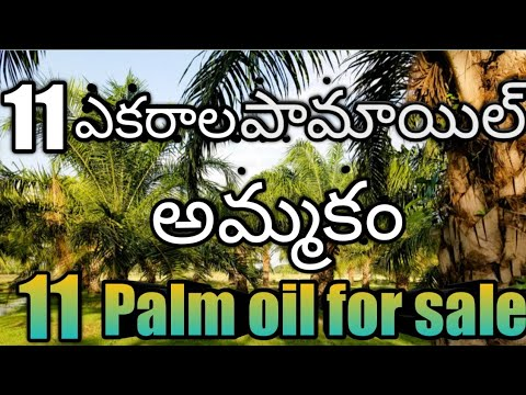 11 Acres palm oil farm land for sale