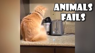 Funny Animals Fails Compilation - Animal Fails Compilation 2019
