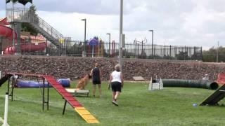 Bandit - Border Terrier Akc Trial - Standard Run - 091111