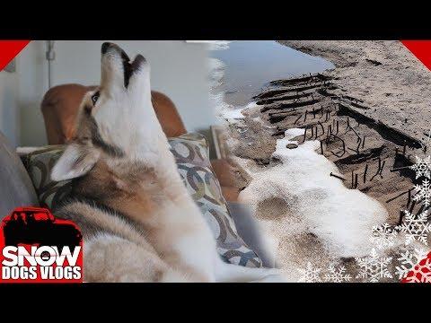 Howling Huskies and a Sunken Ship
