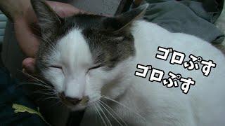帰ってきた飼主に激甘な猫