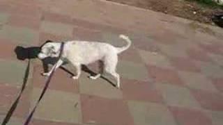 milky my dog