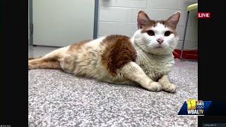 BARCS Animal Shelter Encourages Pet Adoption For National Pet Day