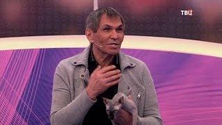 Сухой кошачий корм для взрослых кошек. Естественный отбор