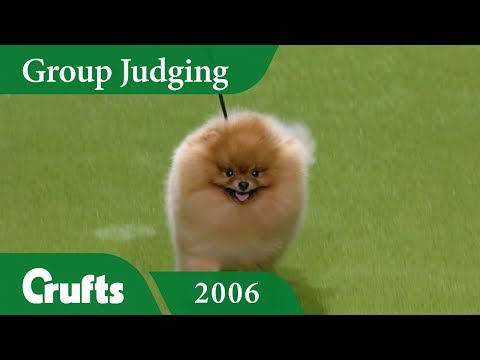 Pomeranian wins Toy Group Judging at Crufts 2006