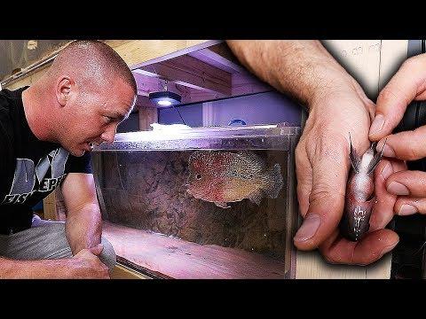 ADDING THE FISH! Frank meets his aquarium wife... | The King of DIY