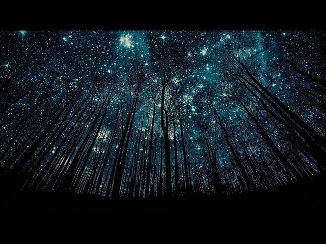 Изображение предпросмотра прочтения – АнастасияБлагодатских читает произведение «Какая ночь! Как воздух чист...» А.А.Фета